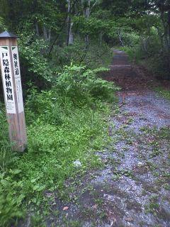戸隠神社中社から奥社入口への道