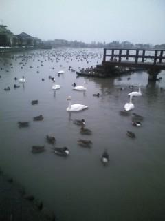 早朝の瓢湖