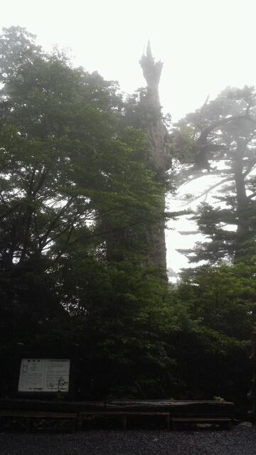 紀元杉からヤクスギランドへ
